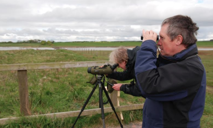 Long-Term Wildlife Survey at Proposed Highthorn Surgace Mine Site Draws to a Close