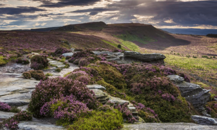 Northumberland National Park needs your vote in race to win National Park of The Year Award