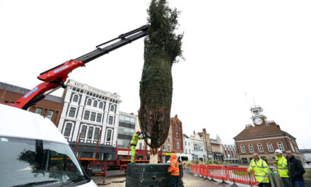 Stockton Sparkles Preparations Continue as Christmas Tree Arrives