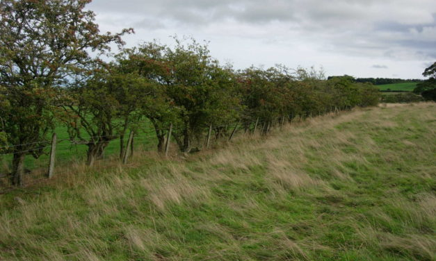 More Farmers to Benefit from Hedgerows and Boundaries Grant