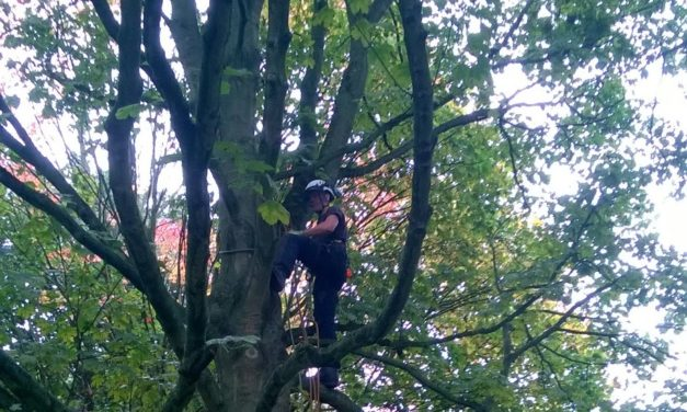 Local apprentice climbs the career ladder