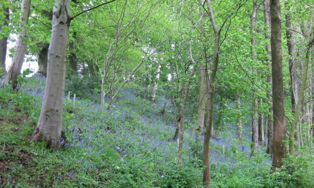 National Lottery revives Durham's woodlands