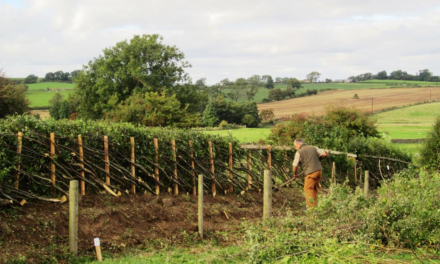 Durham Hedge Laying Competition