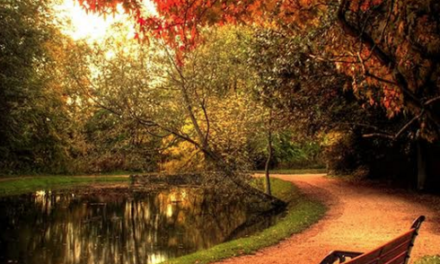 Visitors vote Hardwick Park into Keep Britain Tidy's top 20 green spaces