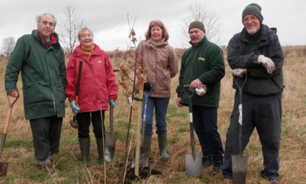 £150 grants available for National Tree Week planting
