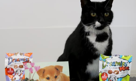 He's feline fine! Boots the miracle moggie uses up three of his nine lives