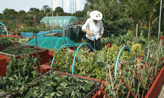Small Allotment Plots Up for Grabs at Town Farm