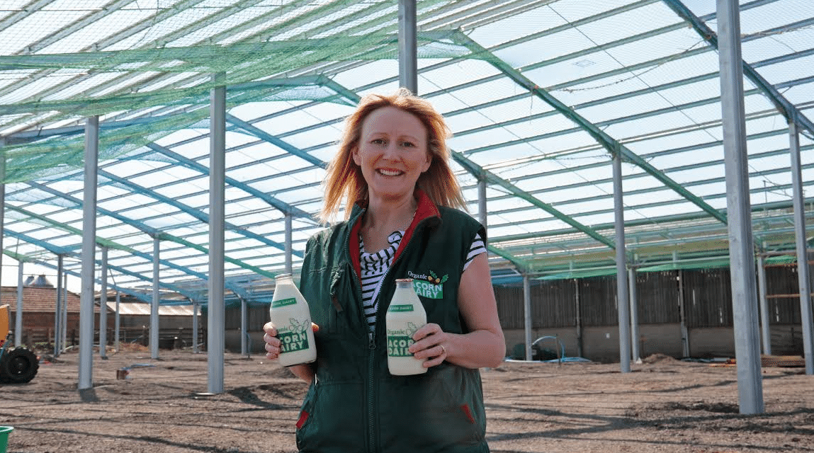 Luxury cowshed to feature auto hairbrushes, foot-spa and memory foam mattresses for organic milkers