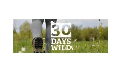 New 30 Days Wild app: Tips to help make room for nature this June