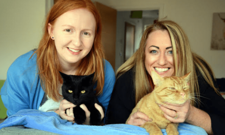 Cat curiosity reveals heart stopping tale