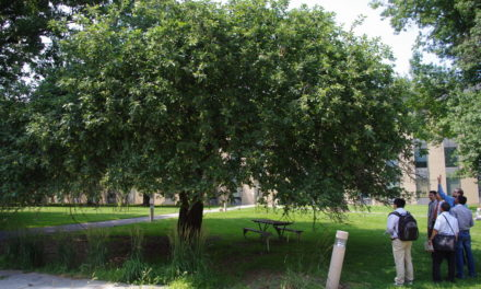 Newton's apple seeds: celebrating international science centre day at Jodrell Bank Discovery Centre