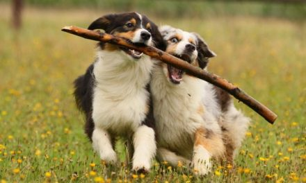 Have your say on dog control measures