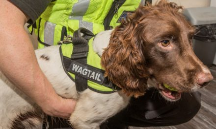 Sniffer dog leads officers to illicit tobacco