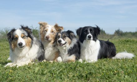 Can you guess which is the North East's favourite dog breed?