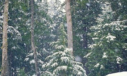 Enjoy a Christmas day out and buy your real Christmas tree from Hamsterley Forest