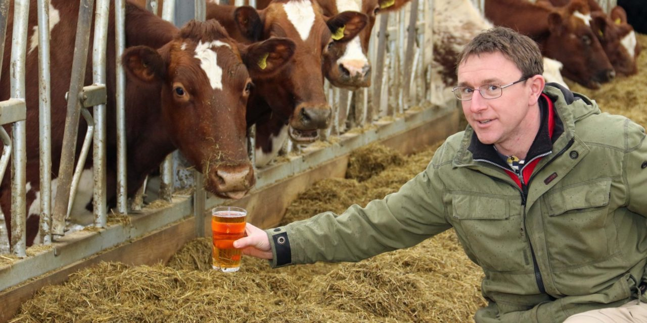 Cider proves to be a tonic for organic cows