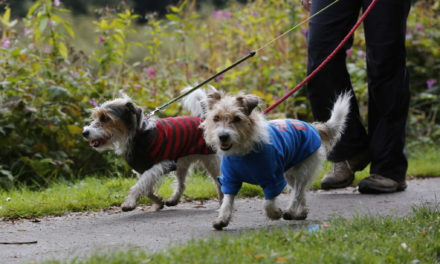 Tails are Wagging for Charity Dog Walk and Show