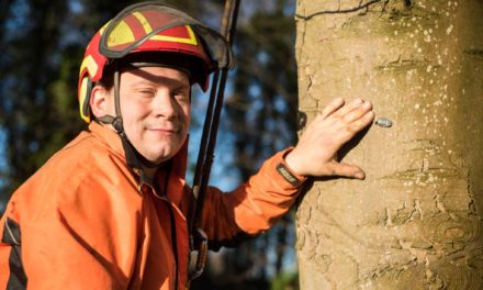Tree surgeon heads for the heights