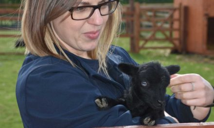 Make this Easter special for somebody – sponsor an animal at autism charity farm