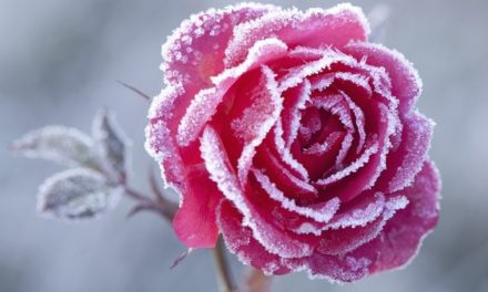 Spring is getting warmer, but frost is a threat