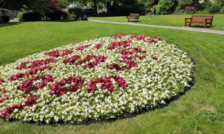 Ponteland prepares for Britain in Bloom judges