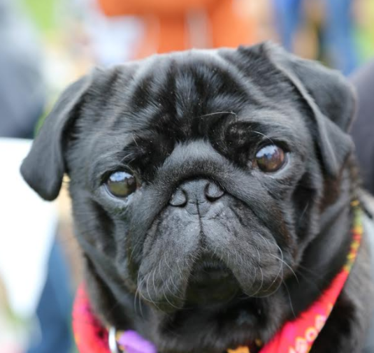 Health games and dog show pair up for Pride