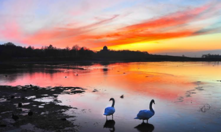 Vote for Hardwick as UK's best park