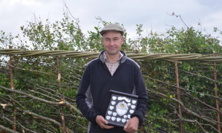 Ancient craft showcased in annual hedge-laying competition