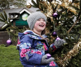 Christmas trees for sale in Redcar and Cleveland