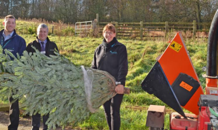 Teesside Hospice launch Christmas tree recycling scheme