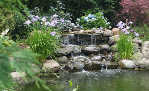 Everything You Need to Know Before You Buy a Pond Pump