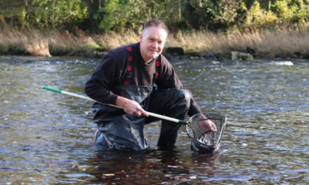 More than 40,000 fish released into north east rivers