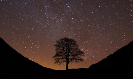 National Park celebrates International Dark Sky Week with a public exhibition and an important message on the impact of light pollution