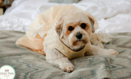 It's Puppy Love this Wedding Season at Slaley Hall