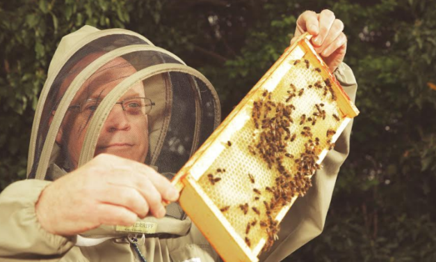 The hive's the limit for North East bee-haviour experts