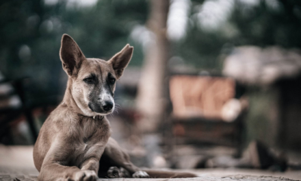 Max Polyakov Initiates The Animal Foundation For Pets That Were Thrown Away