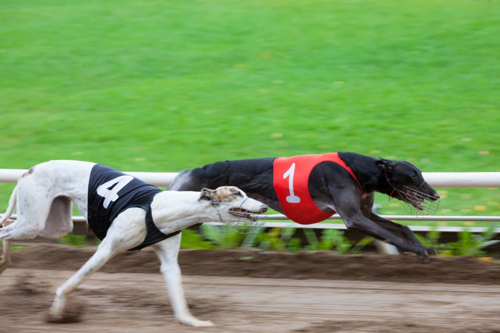 Greyhound Betting: Tricks, Bonuses and other important Things You Need To Know