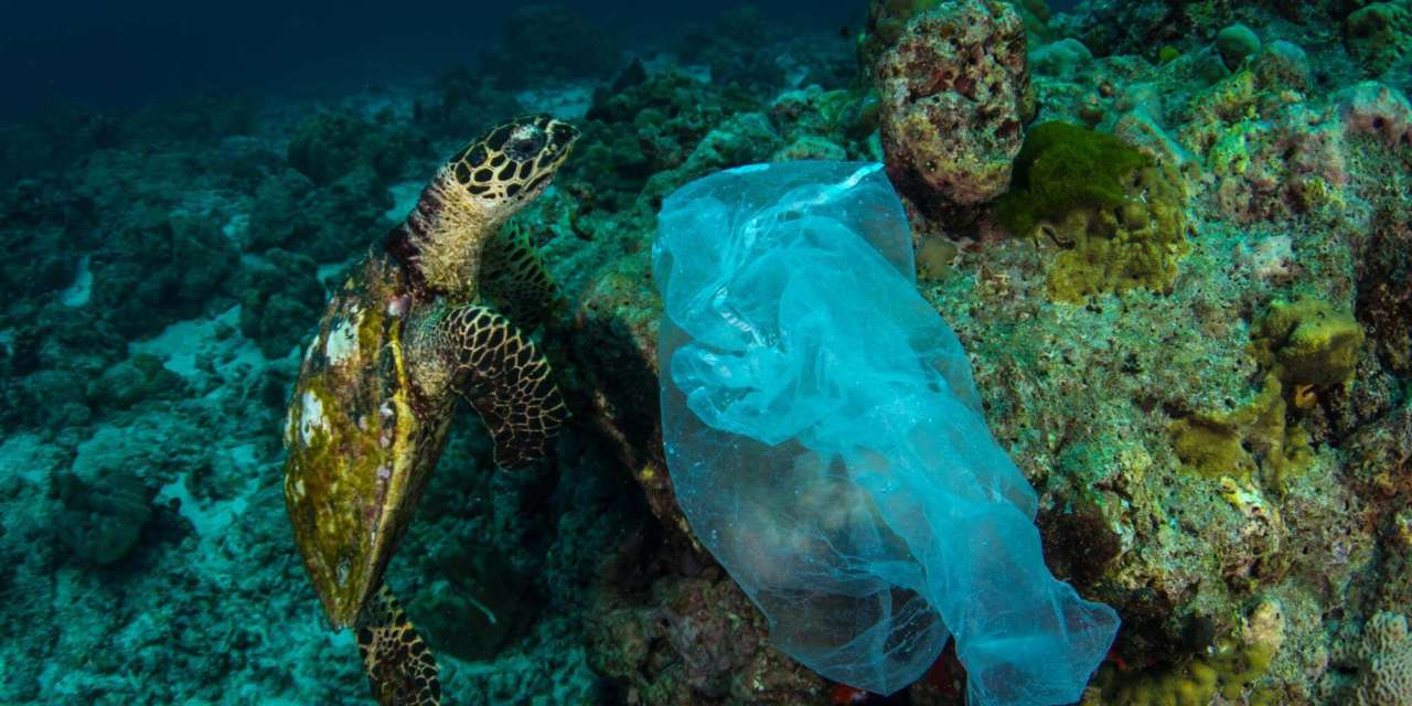 Single-use plastic: The Ever-Growing Footprint on The Environment