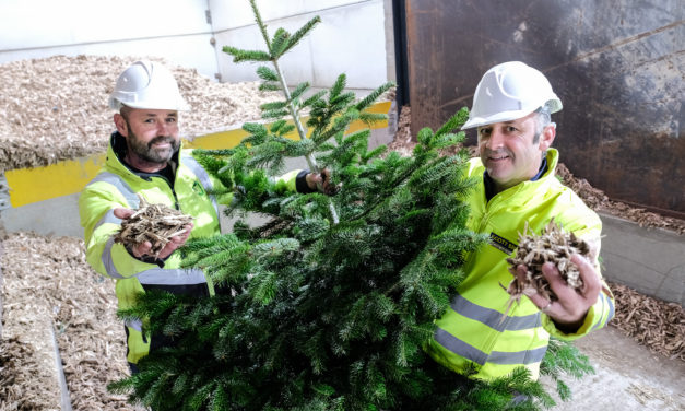 Teesside recycling experts Scott Bros launches Christmas tree initiative