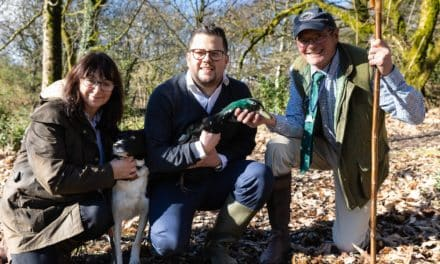 Lake District Inn goes 'quackers' with duck herding for guests