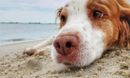 How dogs can bring your business more success