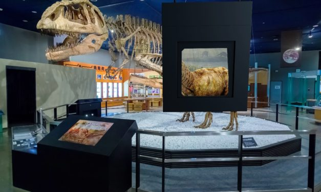 Success of Great Exhibition of the North inspires Animmersion's entrance into visitor attraction market
