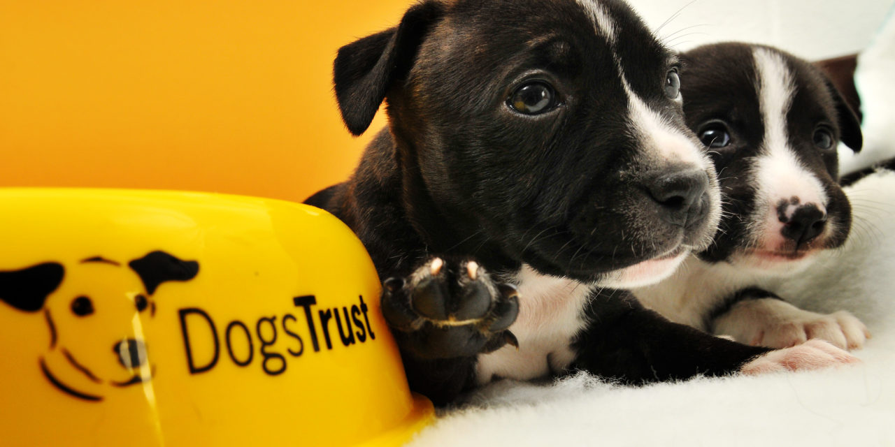 DOGS TRUST CALLS ON PUPPY OWNERS IN TYNE AND WEAR TO TAKE PART IN A ONCE IN A LIFETIME STUDY TO IMPROVE THE FUTURE OF DOG WELFARE