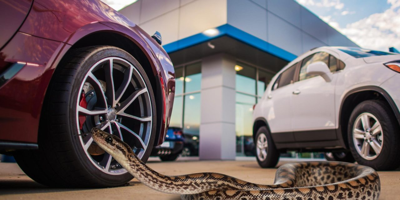 TEST DRIVING ME CRAZY – CARGURUS REVEALS THE WEIRDEST THINGS CAR BUYERS BRING TO TEST DRIVES