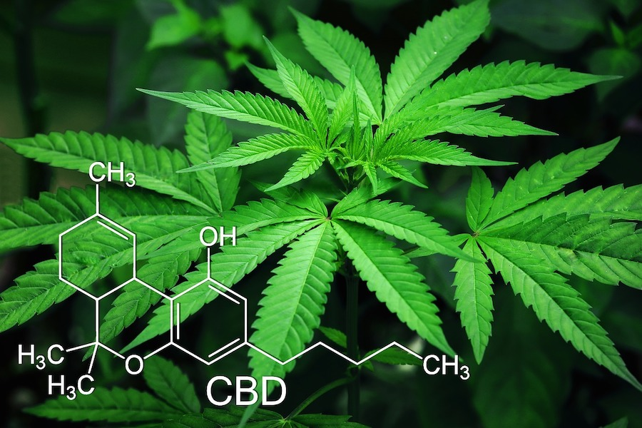 Best cannabis strains for Your medical condition
