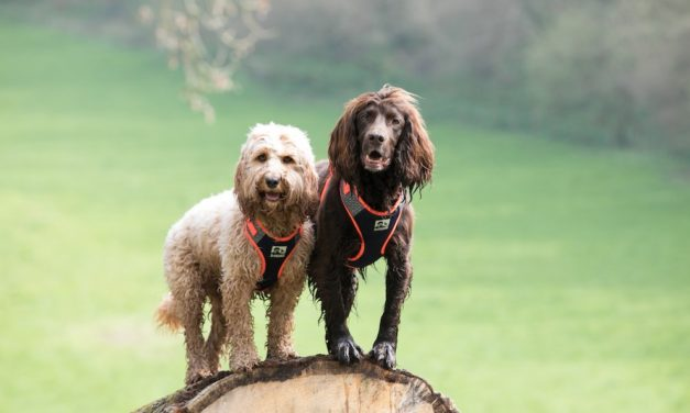 EXPLORE THE BEST OF BRITAIN WITH PETS AT HOME'S 3 PEAKS RANGE