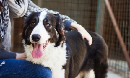 5 Tips On Getting Your New Dog Settled In His New Forever Home