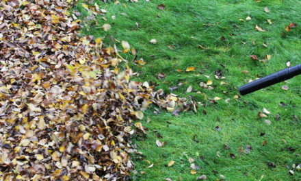 Preparing Your Yard and Trees for Winter