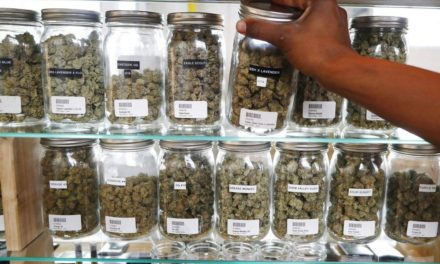 Things to Consider When Choosing a Marijuana Dispensary