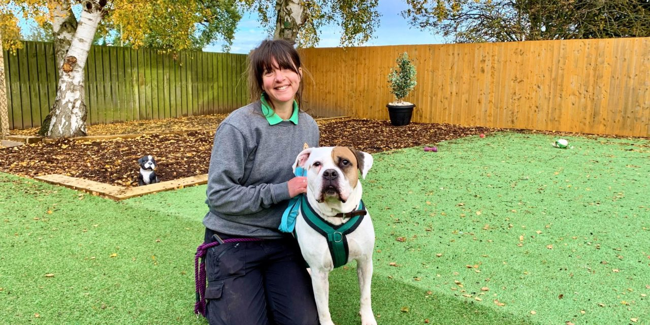 Dog rescue charity benefits from store donation